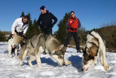 randonnée expédition raquettes et pulka chiens de traineau