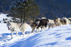 raid husky groenlandais
